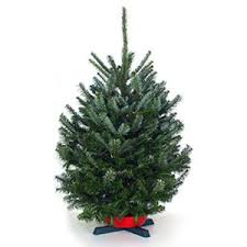 fraser fir tree tabletop fraser fir table top christmas trees