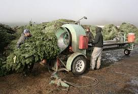 Battaglia Christmas Tree Farm - after long delay christmas tree checkoff board named nation