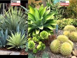 house plant agave landscaping picture set of decorating ideas