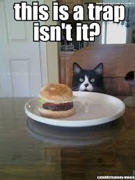 Cat Trap Meme - it s a trap isn t it cat memes pinterest cat animal and kitty