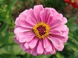 free photo flower purple garden bloom free image on pixabay