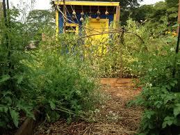 elementary gardens city schoolyard garden