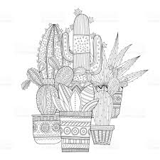 cacti succulents black and white illustration for coloring books