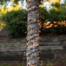 how to wrap christmas lights around a tree christmas net lights 6 x 12 trunk wrap 150 clear lights brown
