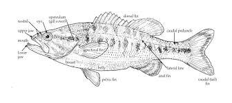tpwd kids fish parts