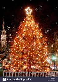 diy large decorated outdoor tree boston common lit