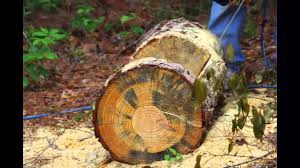 tree stump planters making a tree trunk planter youtube