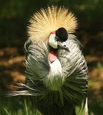 dynamic veiwz beautiful pet birds