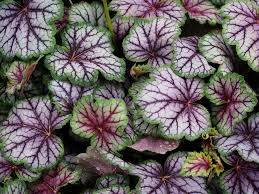 Flower Shrubs For Shaded Areas - top 10 plants for shade the english garden