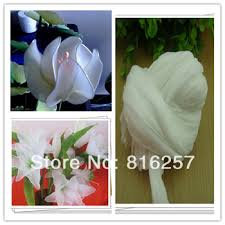 Free Shipping Flowers Cheap Ship Flowers Find Ship Flowers Deals On Line At Alibaba Com