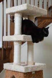 Large Cat Scratching Post 50 Best Scratching Posts Images On Pinterest Pet Furniture Cat