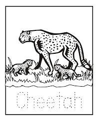 pretty design cheetah animal coloring pages pics photos cheetah