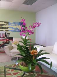 Flower Pot Sale Wholesale Orchids Wholesale Orchids At The Lowest Price