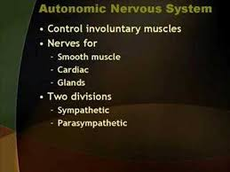 Anatomy And Physiology Nervous System Study Guide Peripheral Nervous System Ck 12 Foundation