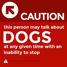 Dog Lover Meme - dog lover meme holistic pet journal