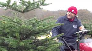 choosing a christmas tree u2013 four different types youtube