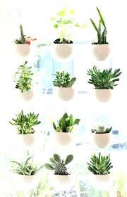 best indoor house plants best indoor house plants musicyou co