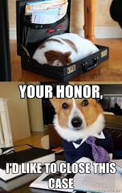 Dog Lawyer Meme - cat and dog lawyer meme guy