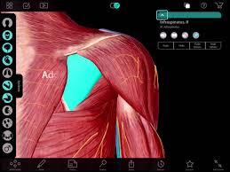 Anatomy Videos Free Download Human Anatomy Atlas 7 Ipad Tutorial Youtube