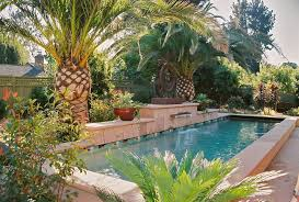 palm tree near pool retaining wall pool tropical with pool coping