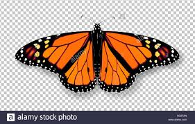 3d monarch butterfly colorful bright detailed mesh