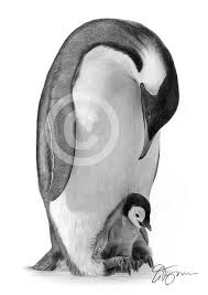 pencil drawing artwork of an emperor penguin by artist gary tymon