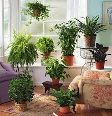 decor plants home house plant decor ideas home decorating ideas