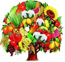 around the home fresh economical produce can be saved for winter