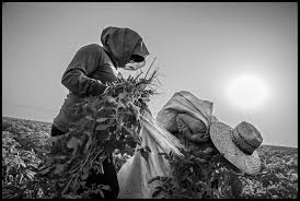 agricultural journalism jobs ukiah zcommunications the fight isn t over for farm worker overtime