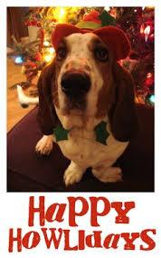 christmas6 15 most beautiful christmas dog photos christmas