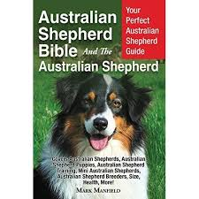 training a australian shepherd puppy australian shepherd bible and the australian shepherd your