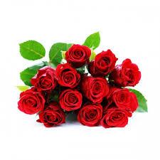 a dozen roses dozen wrapped roses sparr s plymouth mi florist