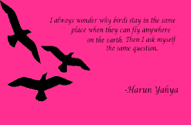 quote birds