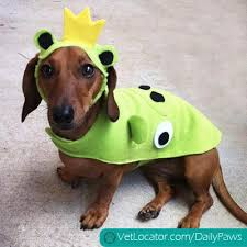 Dachshund Halloween Costumes Pets Halloween Costume Archives Daily Paws Daily Paws