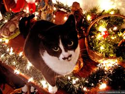 Cat Climbing Christmas Tree Video Christmas Cat Wallpapers Crazy Frankenstein