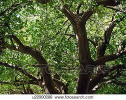 pictures of thick branches and green tree leaves shimmering in a