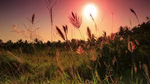 Sunset Orange by Vibrant Sunset Over Field Stock Video Footage Videoblocks