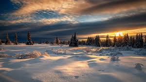 download wallpaper winter forest snow sunset norway norway