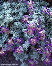 native plants texas texas native plants database