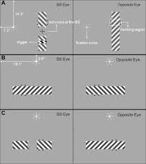 The Blind Spot Of The Eye Characteristics Of The Filled In Surface At The Blind Spot
