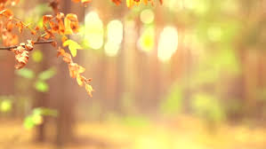 autumn fall bright colorful autumn leaves swaying wind
