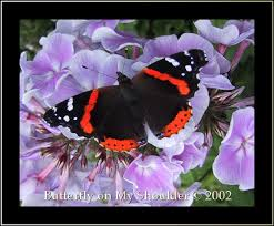 butterfly on my shoulder photography design chilliwack bc canada