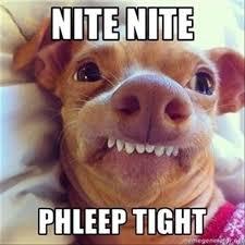 Goodnight Meme Cute - funny good night memes