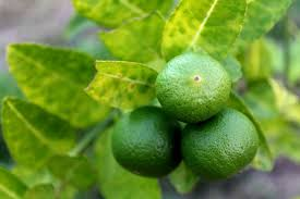 lime can be a solution to get rid of negative energy look4ward