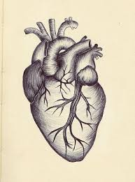 the 25 best anatomical heart drawing ideas on pinterest
