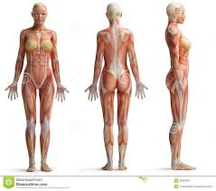 Google Body Anatomy 30 Best 3d Model Topology Images On Pinterest Wireframe