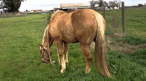 Are Horses Color Blind Clinton Anderson Tricks People To Buy A Whip That Horses Can U0027t See