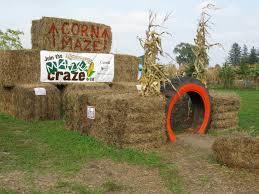 Best Pumpkin Patch Snohomish County by Pumpkins U0026 Family Farm Party Ideas Pinterest Farming Corn