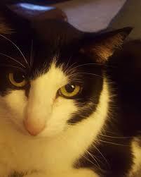 fundraiser by kristina burke vet bills feline histoplasmosis