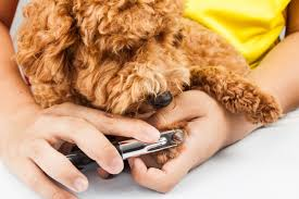 how to teach your dog nail trimming pet lovers u0027 manual toronto star